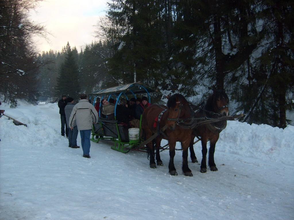 Zimowy zaprzęg konny