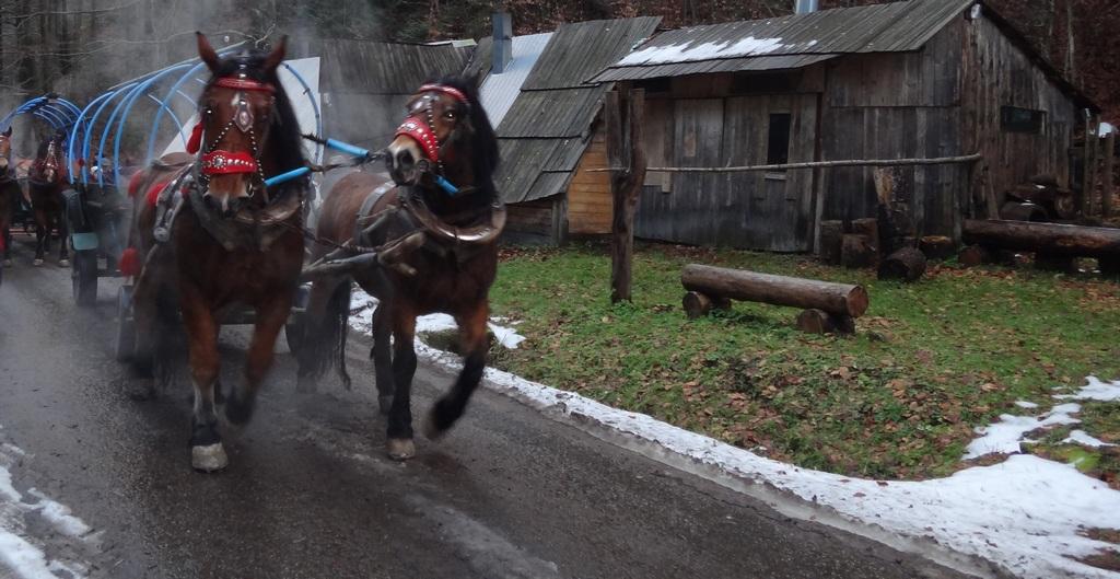 Zaprzęg konny